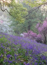 Admirable Jardin bientôt en vente