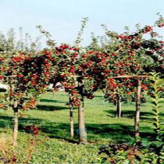 Les jardins de l'Ecomusée de Savigny-le-Temple