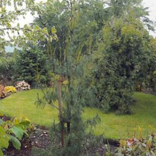 Le Jardin d'Eawy