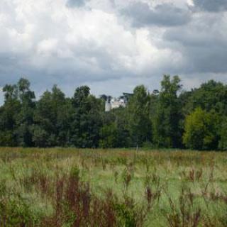 Parcours botanique au fil de l'Indre