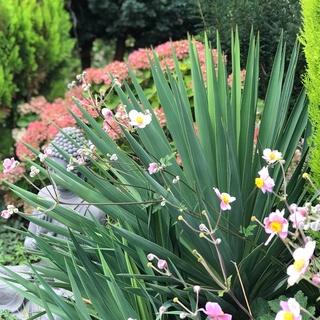 Jardin Surya