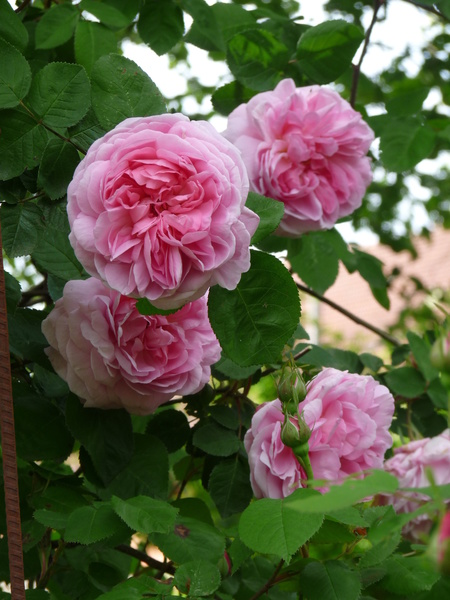 Jardin parfumé