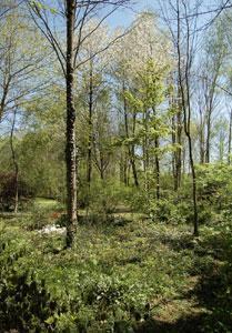 Arboretum du Chêne-Vert