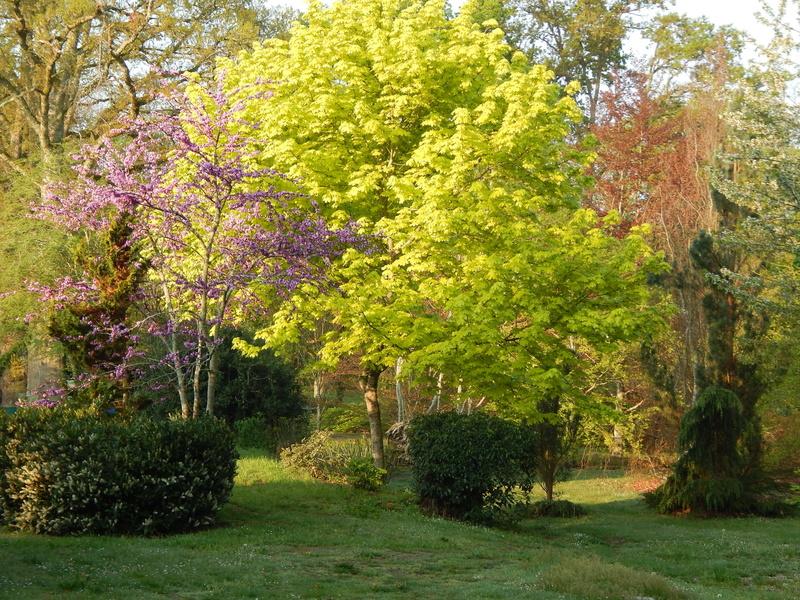 Jardin LACORE