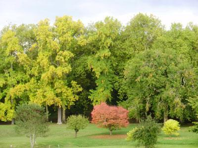 Arboretum de Segrez