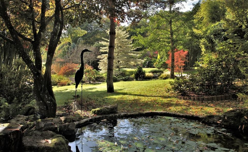 Jardin Aquatique Acorus