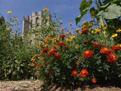 Jardin monastique de l'Abbaye de Lagrasse