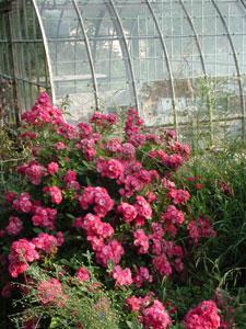 Jardin d'Elsie