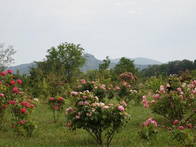 Roseraie des Pommiers