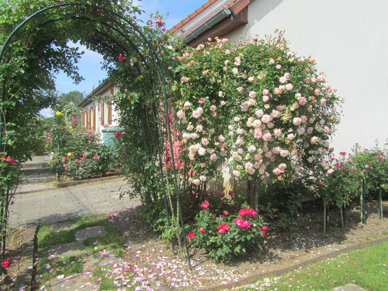 La Roseraie de Brigitte