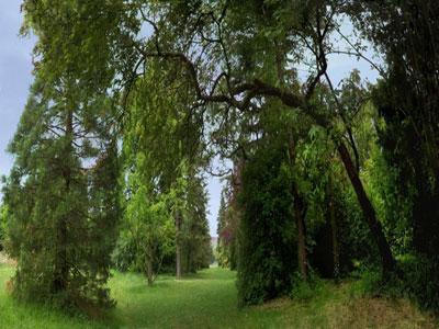 Arboretum de Verrières-le-Buisson Réserve naturelle Roger de Vilmorin