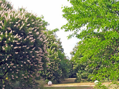 Parc Botanique de Breil de Foin