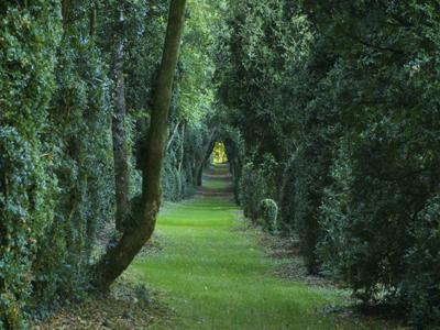 Parc du château de Pesselières