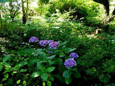 Le Jardin de Cassandra et sa Pépinière
