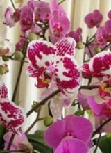 Orchidées, Nature et Découvertes à Eyrignac