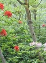 Les Rencontres Botaniques de Varengeville