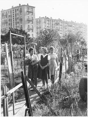 Jardins collectifs : de l'abbé Lemire aux jardins d'insertion