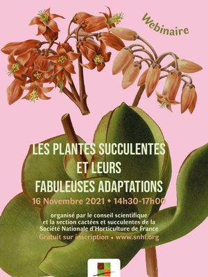 LES PLANTES SUCCULENTES ET LEURS FABULEUSES ADAPTATIONS