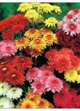 Festival des Fleurs d'Automne au Rivau