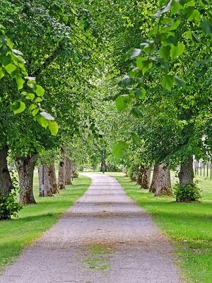 Les allées d'arbres – de la guerre à la paix