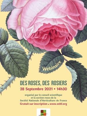 Des roses, des rosiers - webinaire
